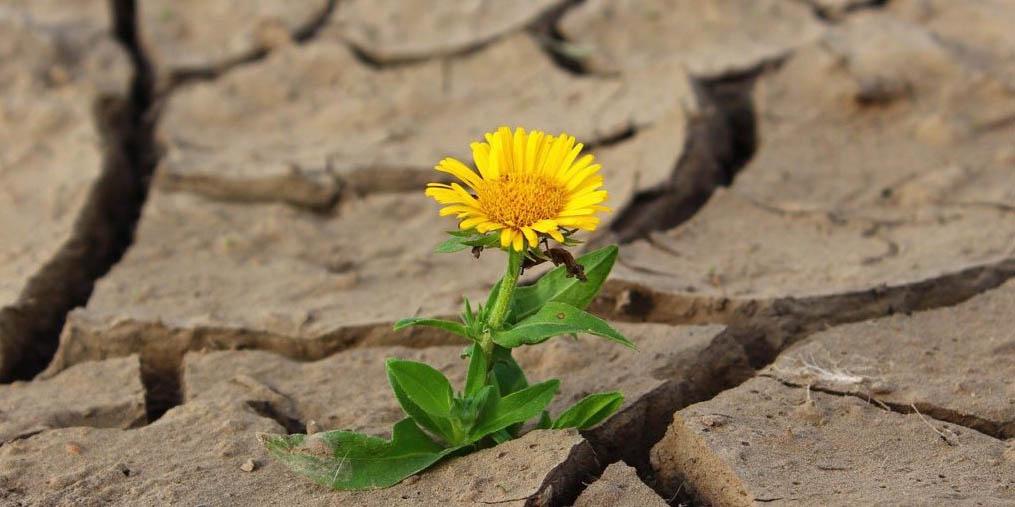 flower-life-crack-cropped